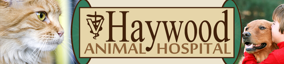 Haywood Animal Hospital